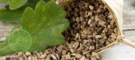 лечебные свойства коры дуба