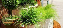 растения по фен шуй