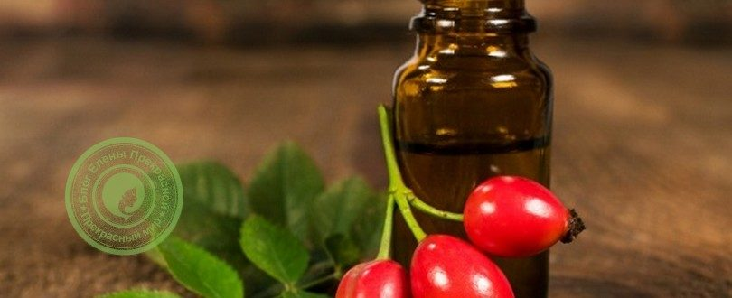 полезные свойства масла шиповника