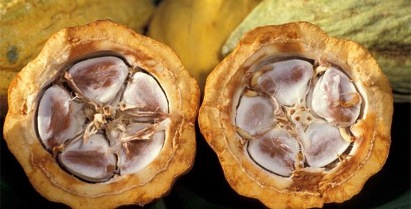 масло какао в лечении