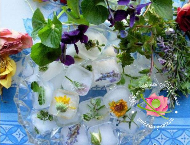 лед с травами для лица