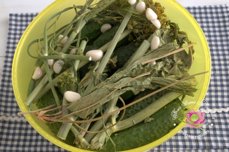 малосольные огурцы на зиму рецепт с фото