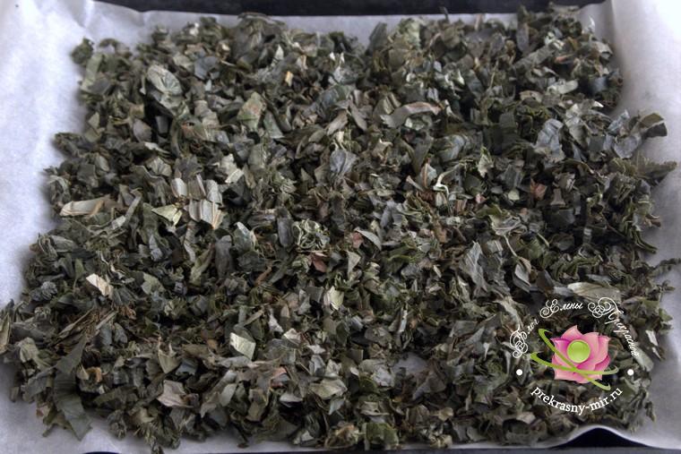 ферментированный чай из листьев клубники с фото