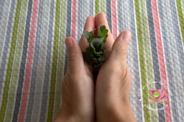 ферментированный чай из листьев клубники рецепт с фото