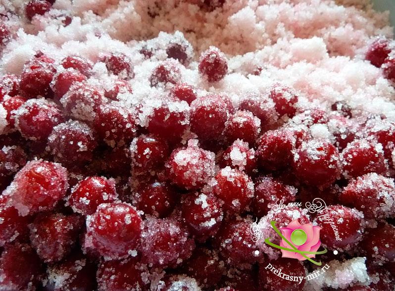 Перетертая калина с сахаром на зиму