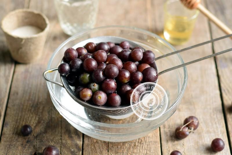 морс из винограда рецепт