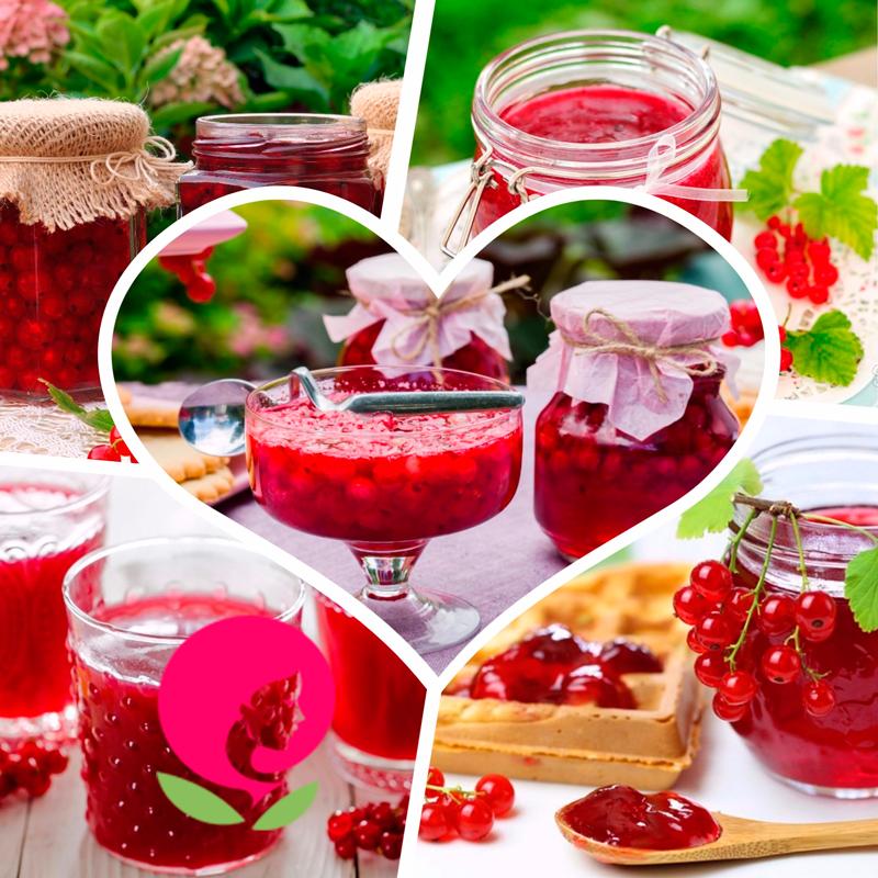 Красная смородина на зиму рецепты в домашних условиях