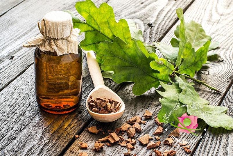 Фото: лечебные свойства коры дуба и противопоказания