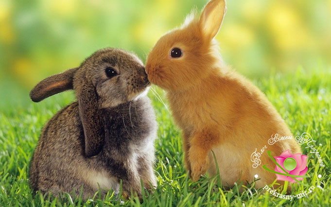 польза поцелуев
