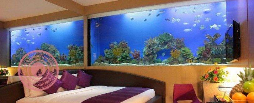 аквариум по фен шуй