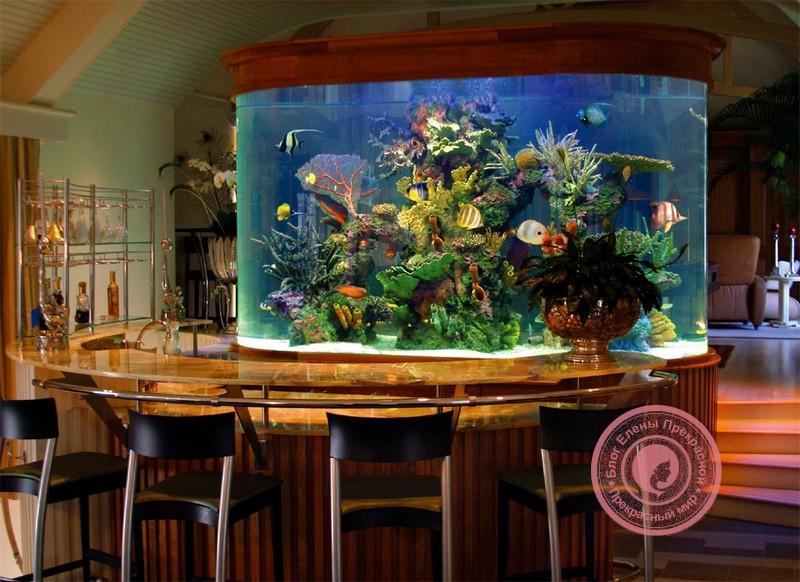аквариум на кухне по правилам фен шуй
