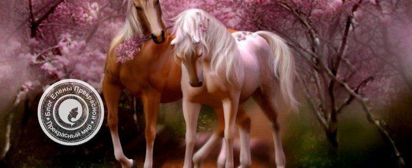 Лошадь по фен шуй значение