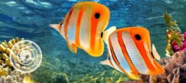 рыбки по фен шуй