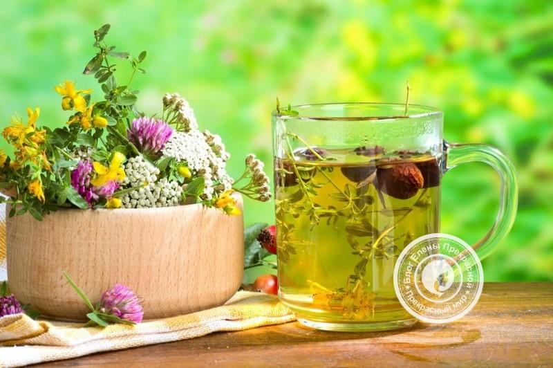 Травы для похудения, сжигающие жир