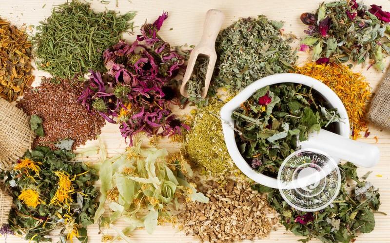 Лучшие виды трав для быстрого похудения