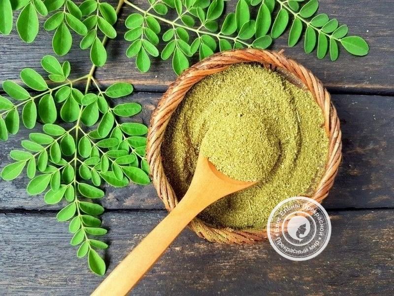 Моринга: состав витаминов порошка