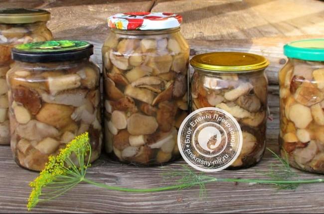 Рецепт маринованных грибов на зиму в банках