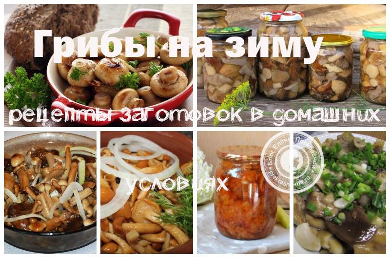 Как заготовить грибы на зиму: фото рецепты в домашних условиях