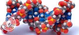 белок