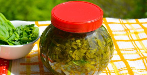 Миниатюра к статье Домашний рецепт щавеля с аспирином— заготовим кусочек лета на зиму