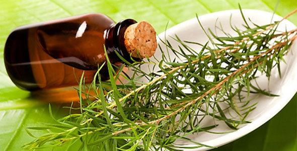Миниатюра к статье Масло чайного дерева— универсальное средство для красоты и здоровья