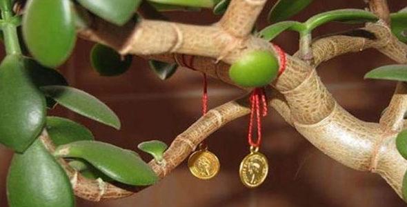 Миниатюра к статье Денежное дерево по фен шуй для богатства и изобилия