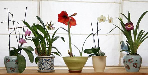 Миниатюра к статье Счастливый дом по рецептам растений по фен шуй